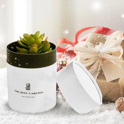 Assorted Succulents in White Ceramic Pot